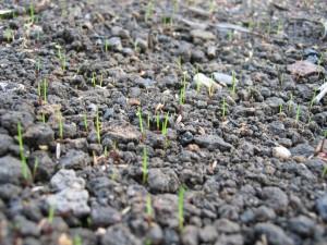 ... der Rasen :-)